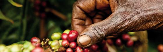 La industria del café: insostenible para las familias productoras y el medio ambiente
