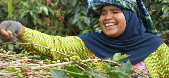 Comercio Justo | Éxito frente al desigual negocio del café y el cacao